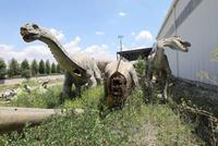 Cimetiere de dinosaure