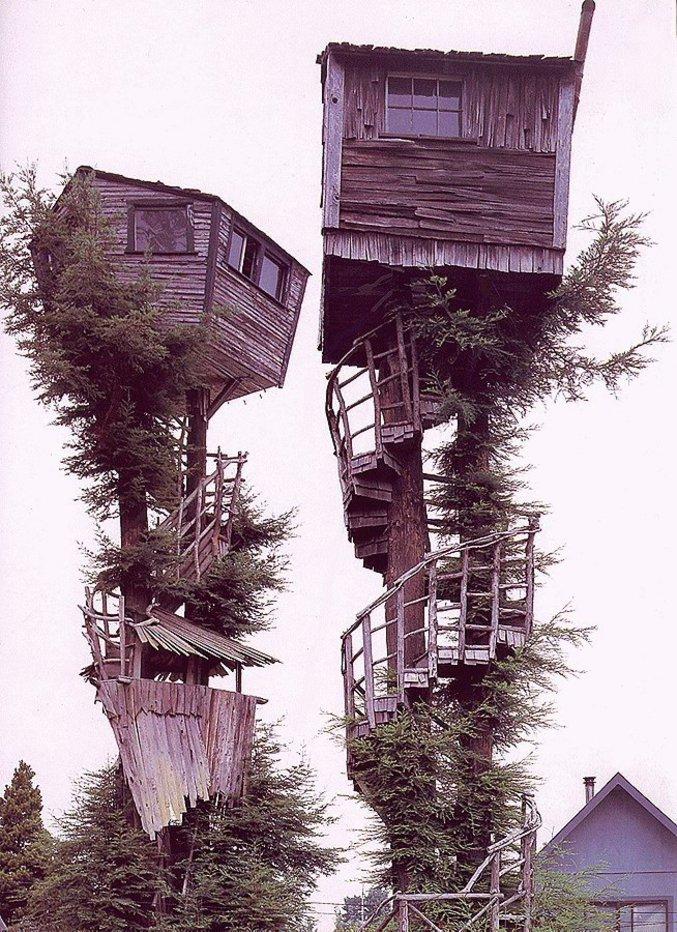 Des cabanes plutôt bien construites dans des arbres.