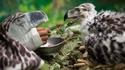 Nourrir un oiseau sauvage en évitant l'accoutumance à l'homme