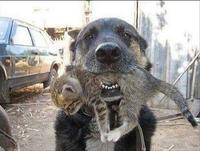 Bon chien çà !