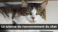 La science du ronronnement du chat - Scilabus