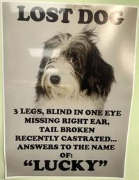 Affiche pour retrouver un chien perdu: L.U.C.K.Y.!!!!