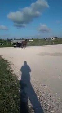 Petite promenade en carriole