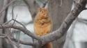 Ého l'écureuil !