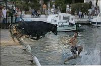 Taureau dans l'eau