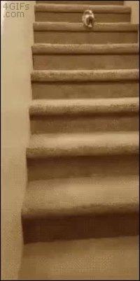 Descente d'escalier prudente