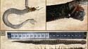 un scolopendre dans une vipère