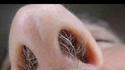 Si t'as un nez comme ça