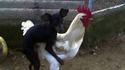 Comment naissent les chiens de punk