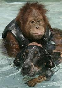 Les premières images d'alerte à Malibu des animaux