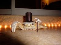 Kraboss le crabe gentleman