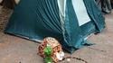 Emmener son chat en camping