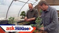 Comment créer un bonsaï à partir d'une plante ordinaire ?