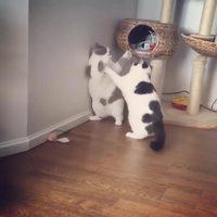 La violence des chats