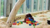 Un moment singe et LEGO