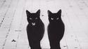 Chat noir, chat noir