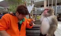 On append pas à un singe