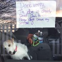 Laisser un chien seul dans une voiture sans eau