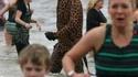 Une girafe à la plage