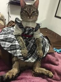 - Pourquoi as-tu acheté des vêtements de poupée alors que notre fille n'en a pas ?