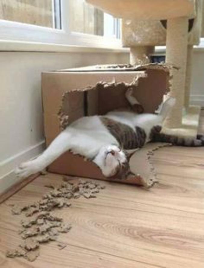 UN chat dans un carton.