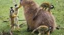 Rencontre dans le monde animal