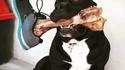 Mon chien s'appelle oskour'...