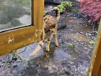 Les chats et l'eau #2
