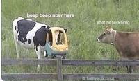 Bip bip, je suis votre Uber