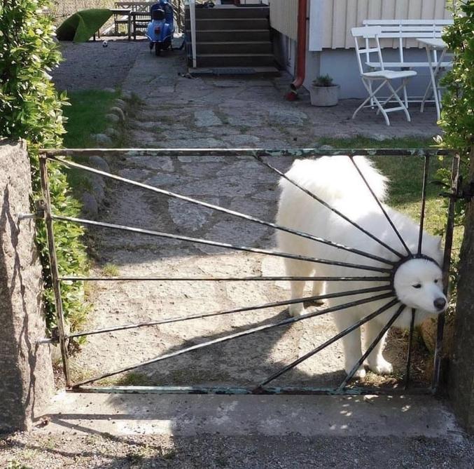 Sous cani-surveillance