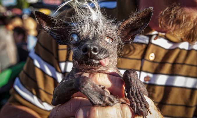 Sweepee Rambo ! Quand on a du chien, ugly is beautiful. Ouarf !