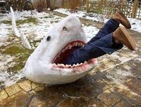 Requin des neiges