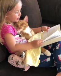 Faire la lecture au chat