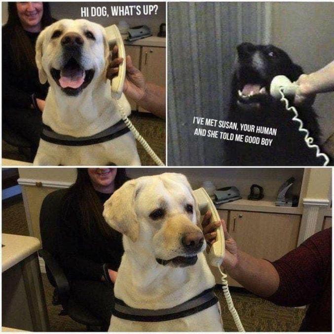 Je suis avec Susan, ton humaine, et elle m'a dit que j'étais un bon chien.
