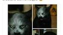 Le vrai visage des chats