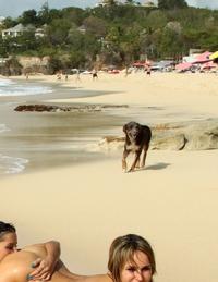 Un chien respre l'air pur de la mer