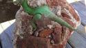 Incroyable découverte paléontogogique !