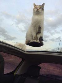 Chat sur toit en plexiglas
