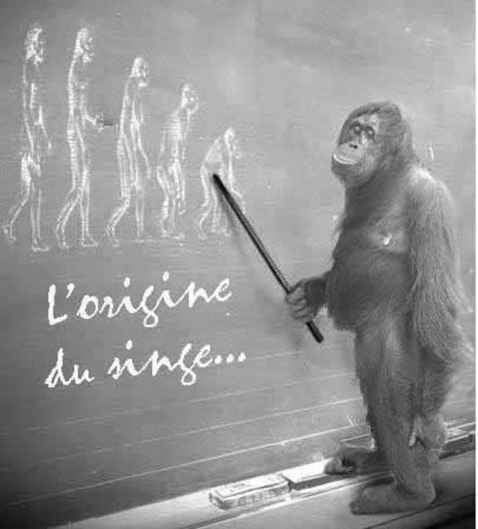 Le singe ne descend pas de l'arbre....