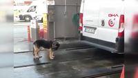 Un chien au bout du rouleau