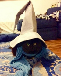 Bibi le chat