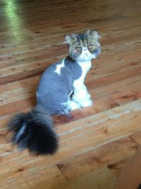 Un chat... différent ?