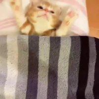 Un petit chaton tout mignon