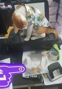 Un chat, un scanner...
