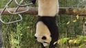 Kung-fu panda est de retour !