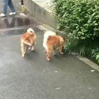 Entre chiens et loops