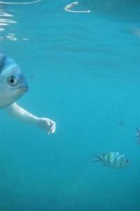 Un bras de mer