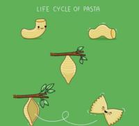 La vie des pâtes :)