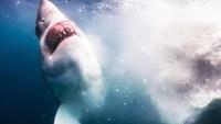 Fin d'une baleine (cachalot ?)