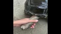 Masser le cou d'une tortue